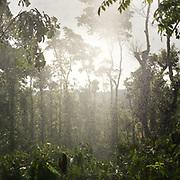 Coffee plantation and trees under heavy reain.