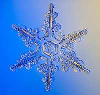 Snowflake photographed through microscope