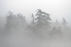 Trees Through the Fog, Stuart Island, Washington, US