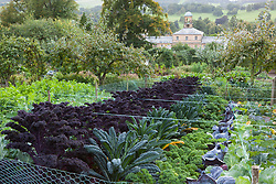 The kale bed in the kitchen garden at Chatsworth House with ribbon used to protect the crops