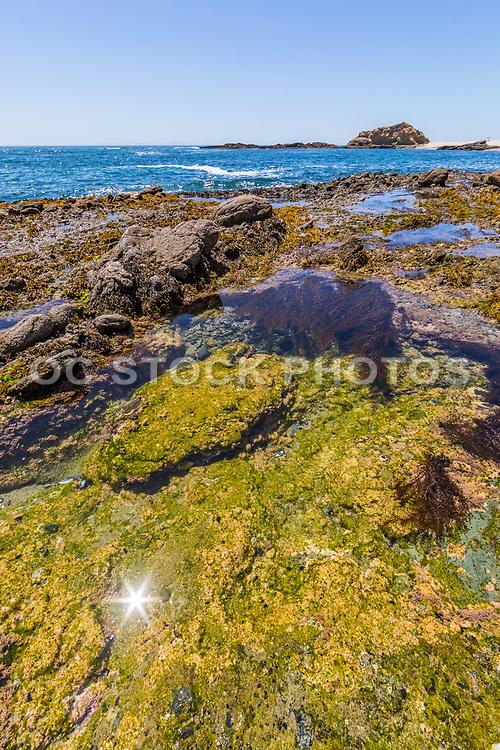 Tide Pools at Treasure Island Beach