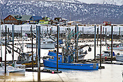 """Fishing vessel, """"Scepter,"""" stands out in the Homer Boat Harbor during a cold, icy winter day."""