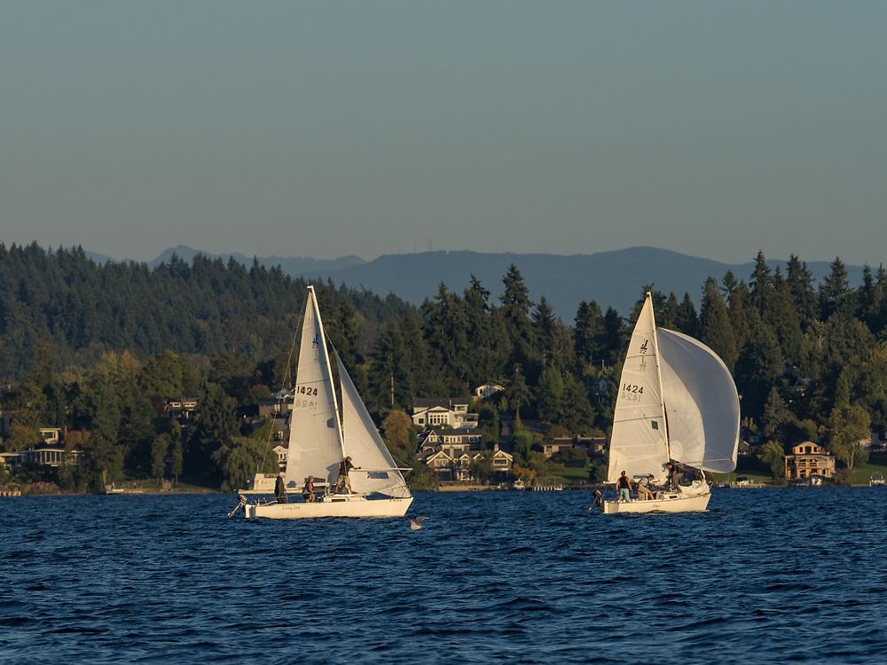 United States, Washington, Bellevue, sailboats on Lake Washington