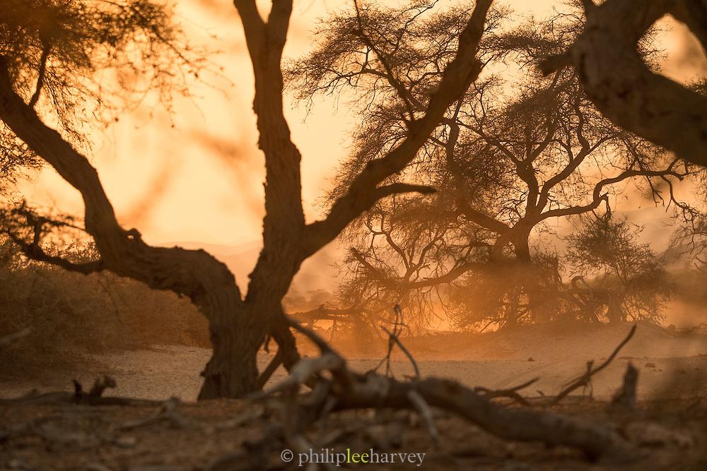Sunlight through trees, Skeleton Coast, Northern Namibia, Southern Africa