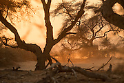 Sunlight through trees, Skeleton Coast, Northern Namibia, Southern Africa