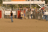 Sheep riding, mutton busting,  Kids rodeo at Livingston Montana