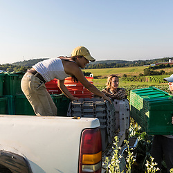 Farm workers load vegetables onto a truck a farm on Kinney Hill in South Hampton, New Hampshire.