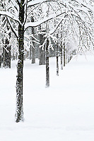 A line of trees in a snowy winter wonderland park