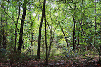 The utterly beautiful dark forest in Torreya State Park in North Florida, with its steep decent to the Apalachicola River.