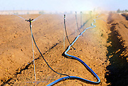 Israel, Negev, watering fields with sprinklers a rainbow is formed by the sun light and water drops