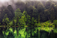 Small lake in misty green forest