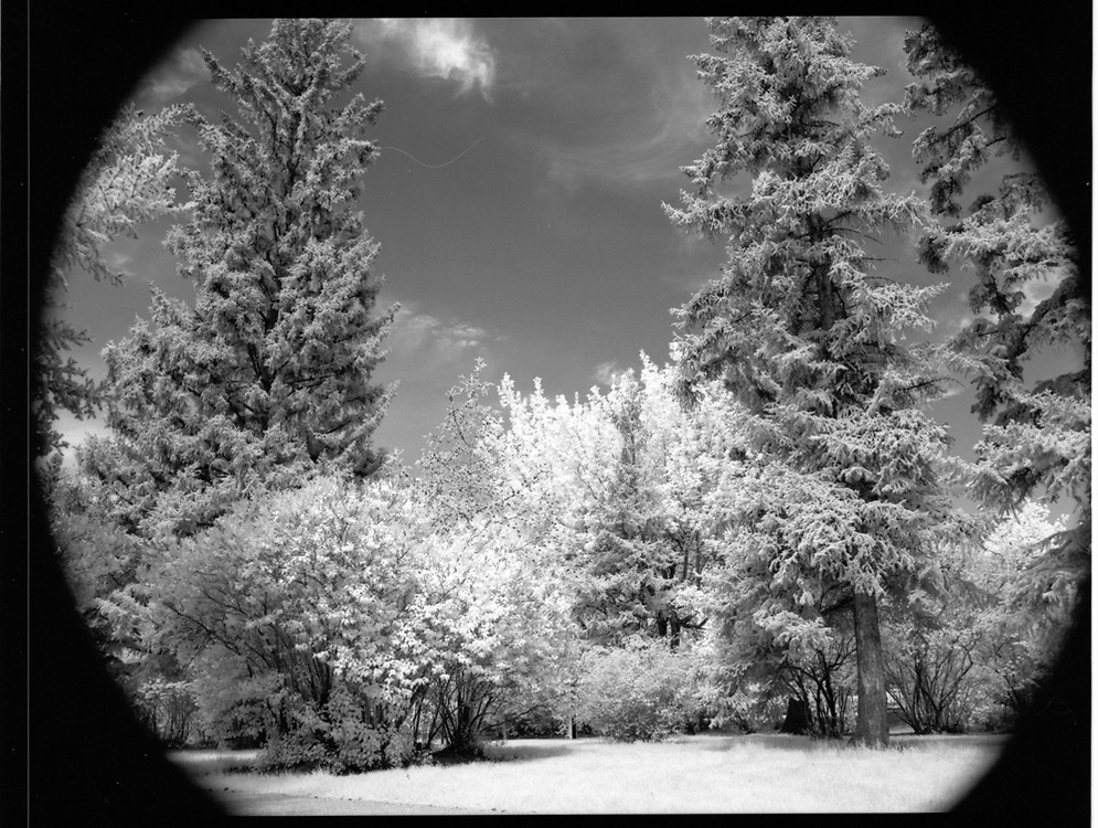 Buena Vista Park, Saskatoon, Saskatchewan. Rollei Infrared 400 120mm, 2017-05-20, Hoya R72 filter, 1/4 @ f/16.