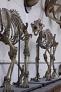 Skeletons at Tulane Univeristy's Natural History Museum