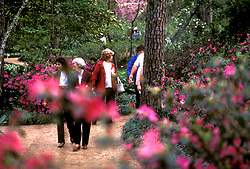 Stock photo of visitors to Bayou Bend enjoying the scenery along the azalea trails.