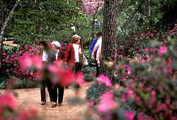 Stock photo of visitors to Bayou Bend enjoying the scenery along the azalea trails.