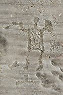 Petroglyph, rock carving, of a warrior holding swords and shields. Carved by the ancient Camuni people in the iron age between 1000-1600 BC. Rock no 24,  Foppi di Nadro, Riserva Naturale Incisioni Rupestri di Ceto, Cimbergo e Paspardo, Capo di Ponti, Valcamonica (Val Camonica), Lombardy plain, Italy .<br /> <br /> Visit our PREHISTORY PHOTO COLLECTIONS for more   photos  to download or buy as prints https://funkystock.photoshelter.com/gallery-collection/Prehistoric-Neolithic-Sites-Art-Artefacts-Pictures-Photos/C0000tfxw63zrUT4<br /> If you prefer to buy from our ALAMY PHOTO LIBRARY  Collection visit : https://www.alamy.com/portfolio/paul-williams-funkystock/valcamonica-rock-art.html