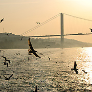 A flock of seagulls flies over the Bosphorus with the Bosphorus Bridge in the background through the haze and the setting sun. The Bosphorus Bridge, also called the First Bosphorus Bridge  (Turkish: Boğaziçi Köprüsü or  Boğaziçi Köprüsü) is one of the two bridges in Istanbul, Turkey, spanning the Bosphorus strait and connecting Europe and Asia. The shoreline visible in this shot is the Beylerbeyi district on the Asian side.