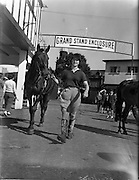 "01/08/1960<br /> 08/01/1960<br /> 01 August 1960<br /> R.D.S Horse Show Dublin (Monday). Miss Audrey Hamilton -Tarleton , of Roscrea, arriving at the Dublin Horse Show on Monday, with her horse ""Telagh"" entered in the hack class at the show . The show opened the next day Tuesday the 2/8/1960."