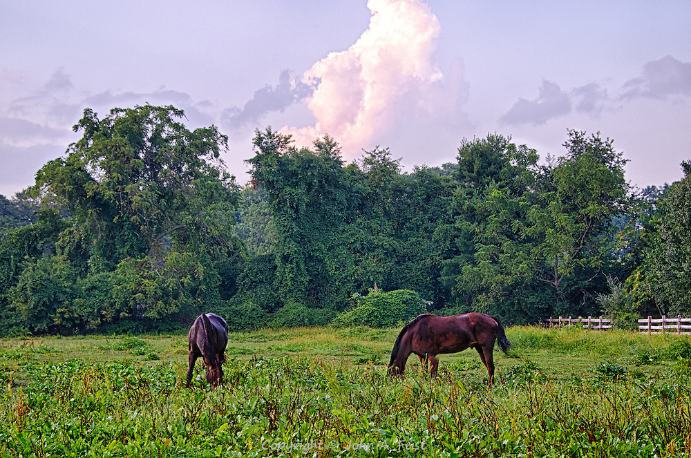 A late summer afternoon in Shrewsbury, New Jersey.  A pair of horses enjoying the lush grass and paying absolutely no attention to me.