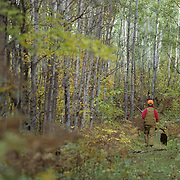 A hunter with a black lab walking on a logging road looking for grouse during the fall in Minnesota.
