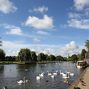 Ducks and Swans on the River Avon at Stratford-upon-Avon, a market town and civil parish in south Warwickshire, England. It lies on the River Avon. The town is a popular tourist destination owing to its status as birthplace of the playwright and poet William Shakespeare, receiving about 3 million visitors a year. The Royal Shakespeare Company resides in Stratford's Royal Shakespeare Theatre. Photo Tim Clayton