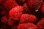 USA, Oregon, Keizer, red rasberries.