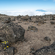 A few small yellow flowers grown in the rocky, rugged apline desert on Mt Kilimanjaro Lemosho Route. These shots were taken on the trail between Moir Hut Camp and Lava Tower at approximately 14,500 feet. In the distance, the summit of Mt Meru pokes through the clouds.