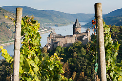 Stahleck Castle viewed from Vineyard in Bacharach village on Romantic River Rhine in Germany