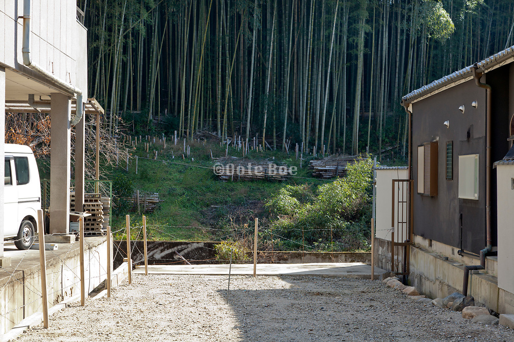bamboo forest by residential housing Nara prefecture Japan