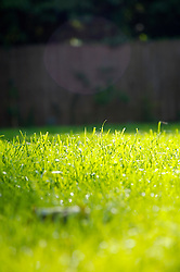 Close up of overgrown lawn