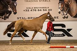 080, Silas van de Gaverstede<br /> BWP Hengstenkeuring 2021<br /> © Hippo Foto - Dirk Caremans<br />  11/01/2021