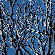 Trees covered in snow after a storm. Photo by Adel B. Korkor.