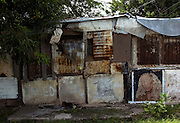 Trenchtown 2005
