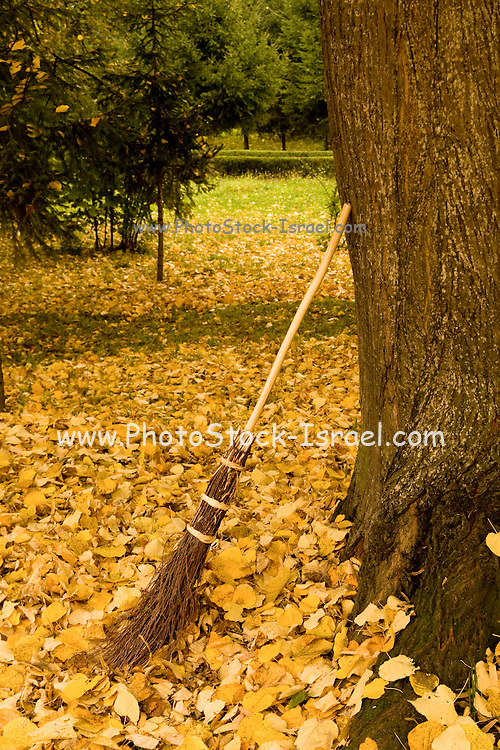 Romania, Transylvania, Crude reeds broom (such as could be used by a witch) leans against a tree in a forest covered with autumn leaves