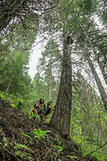 Angie Denny and with her hounds and a treed bear during a spring bear hunt in Idaho