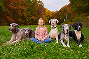 Three great danes and two irish wolfhounds with one girl sitting in grass field for portrait session