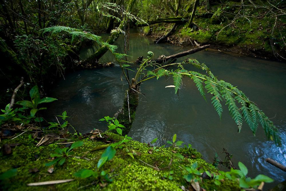Pocos de Caldas_MG, Brasil...Reserva Particular do Patrimonio Natural (RPPN) em Pocos de Caldas...Private Natural Heritage Reserve (RPPN) in Pocos de Caldas...Foto: JOAO MARCOS ROSA / NITRO