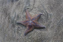July 21, 2019 - Starfish On Beach (Credit Image: © Deddeda/Design Pics via ZUMA Wire)