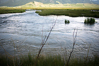 """About 300 willow """"poles"""" were planted along a section of Flat Creek last week on the National Elk Refuge as part of an experimental river bank restoration project. A large fence enclosure erected the same day will protect the plants from elk that forage on the refuge in the winter."""