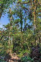 forest trekking track of the Mombacho Volcano Granada in Nicaragua