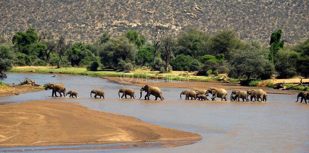 African Elephants crossing the river Ewaso N'giro in Samburu NP, Kenya