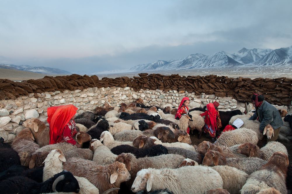 In this high, barren plateau, survival depends on livestock. Red-robed Kyrgyz girls corral sheep for milking, while dung dries atop the walls for use as fuel. The sheep, along with goats, yak and camels provide milk, meat and wool.