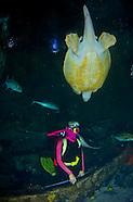 Guam Underwater World Walk-thru Aquarium
