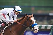 November 1-3, 2018: Breeders' Cup Horse Racing World Championships. Jockey Drayden Van Dyke and Improbable win the Street Sense stakes race