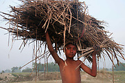 Bihar India March 2011. Young boy carrying straw.
