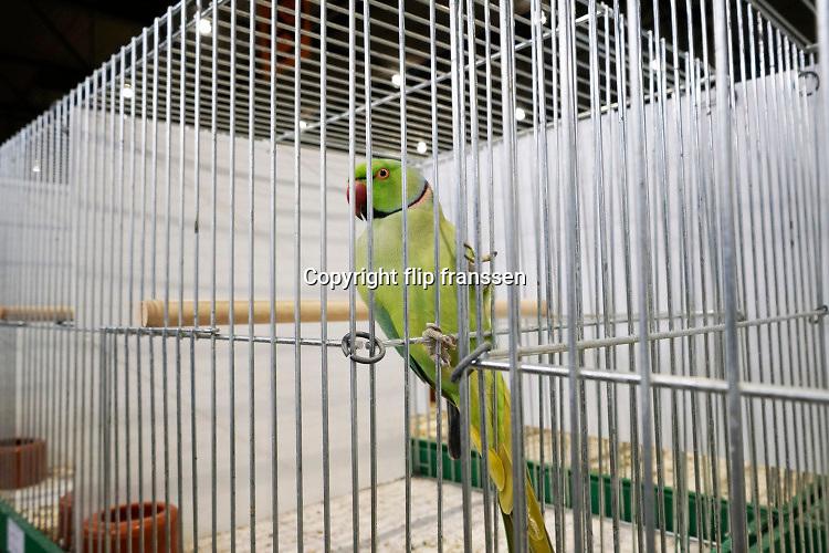 Nederland, the netherlands, Zwolle, 11-1-2019  De vogelshow com mondial 2019 is een van de grootste in zijn soort en trekt veel nationale en internatiobnale vogelfokkers en liefhebbers naar de ijsselhallen .Foto: Flip Franssen
