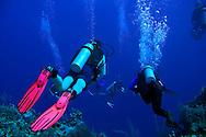 West Wall, Scuba Diving, Grand Cayman, Bonnie's Arch