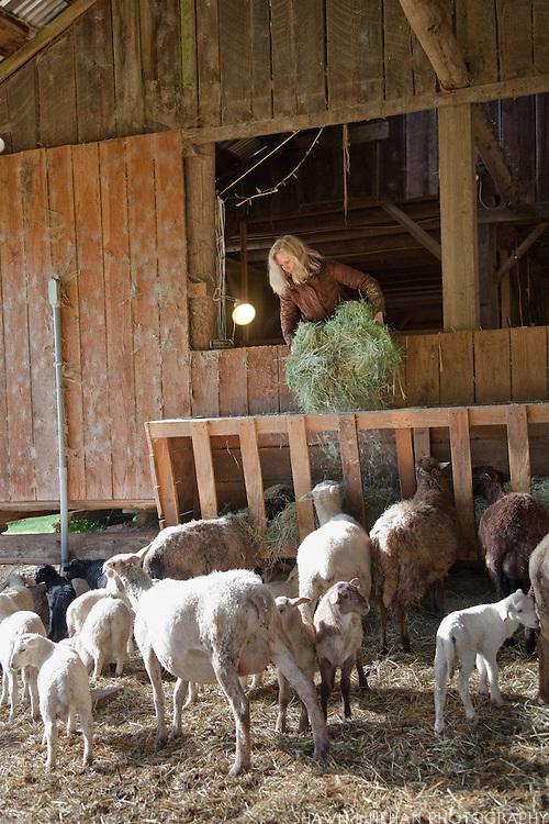 A helper feeds the animals.