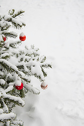 Part of decorated and snow covered Christmas tree