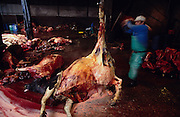 Europe, Great Britain, Midlands. Abattoir. Beasts unfit for normal consumption are butchered. Some will be turned into pet and animal food. 1996.'MEAT' across the World..foto © Nigel Dickinson/Grazia Neri